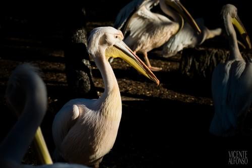 Prueba Fujifilm X-Pro1 por el fotógrafo Vicente Alfonso